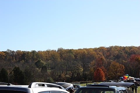 Fall trees in VA.JPG