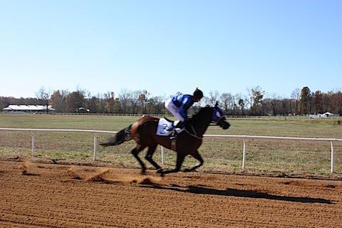 Montpelier hunt races4.JPG