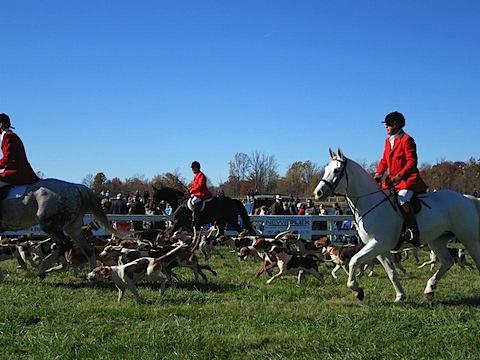 montpelier hunt races.jpg