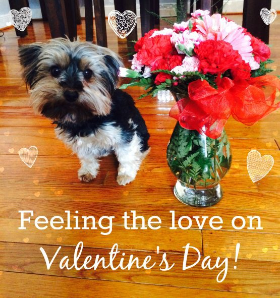 10 Ways to Give & Feel Love this Valentine's Day