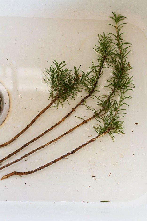 Rosemary sprigs soaking.