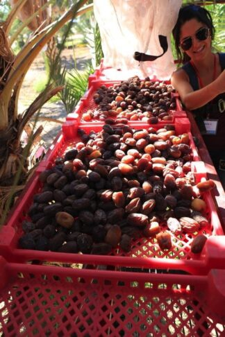 Everything You Need to Know About Medjool Dates