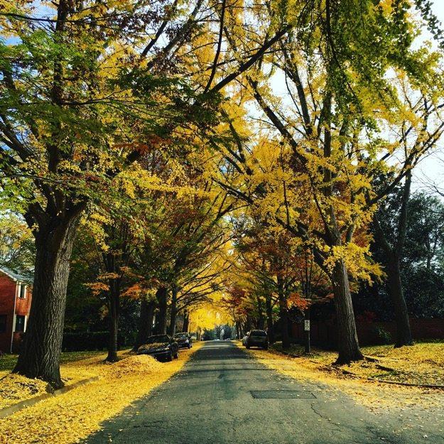Fall in Richmond
