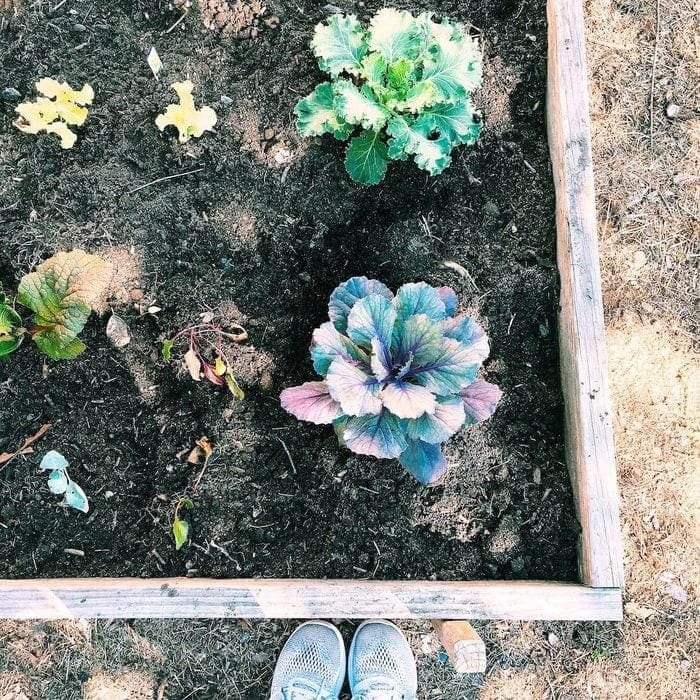 Plants with a Purpose Fall Crops