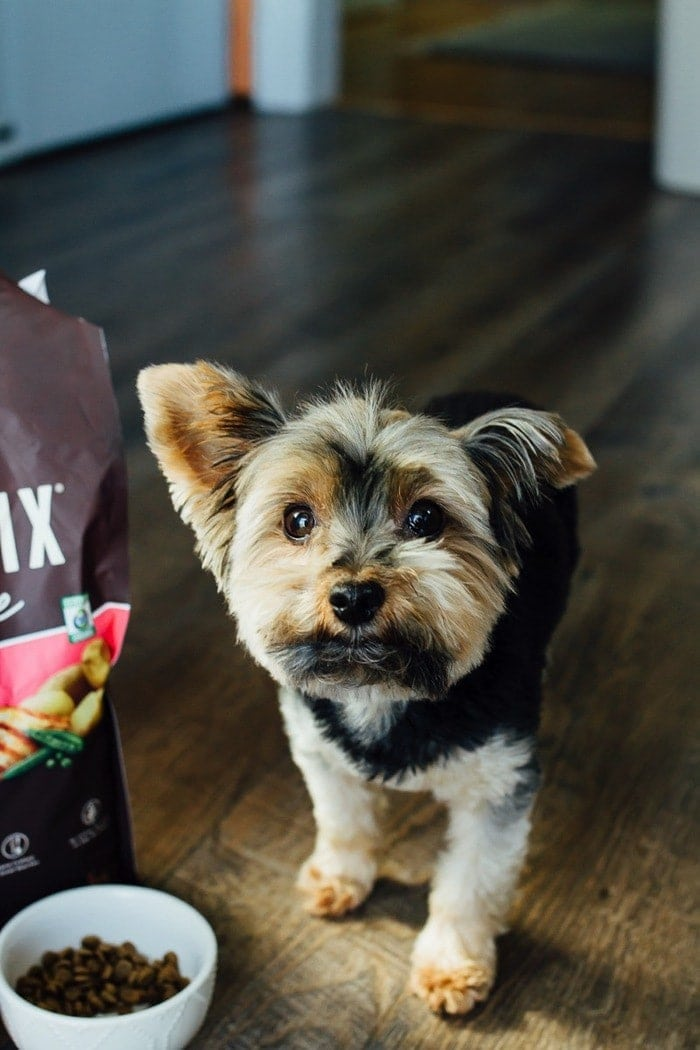 Why we feed our Yorkie natural, organic dog food.