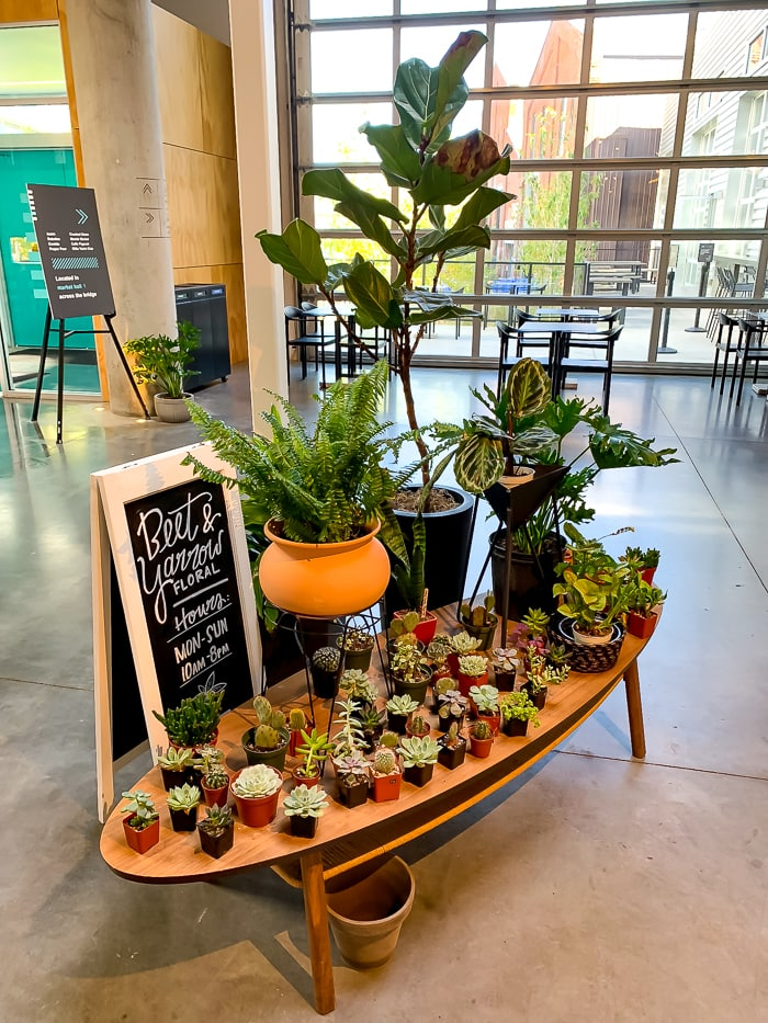 "A low table filled with succulents and houseplants at a shop inside of ""The Source"" in Denver."