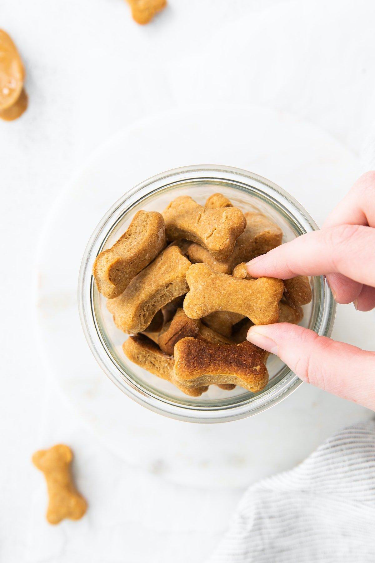 يد تلتقط طعام كلب محلي الصنع من البرطمان.
