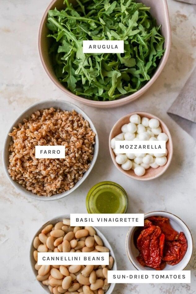 Arugula, farro, mozzarella, basil vinaigrette, sun-dried tomatoes and cannellini beans measured out into bows and jars.